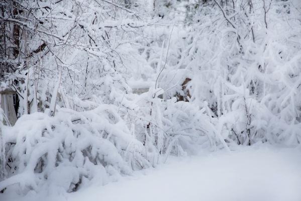 Морозы доминус 35 обещают вЦентральной РФ