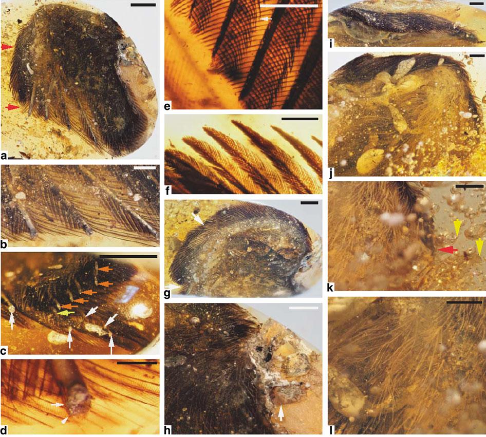 Палеонтологи отыскали крылья птиц, обитавших вэпоху существования динозавров