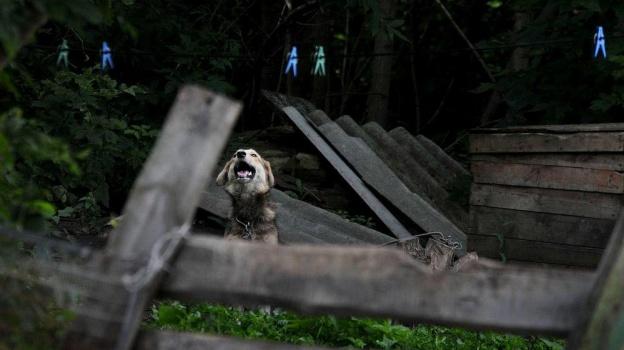 В Воронеже бездомных собак предлагают ловить, чтобы отпускать