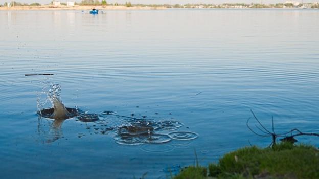 Только сальмонеллы нехватало!: Санитарные мед. работники  забраковали 11 берегов  вВоронежской области