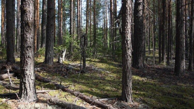 Пропавший вНовосибирской области грибник найден живым