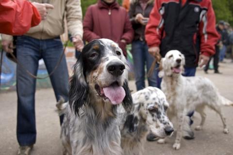 Вдеревнях Подольска будут проводить вакцинацию животных отбешенства доначала лета