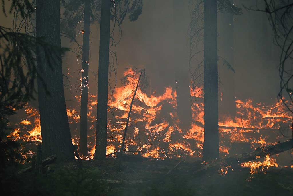 В лесах Иркутской области вводится особый противопожарный режим