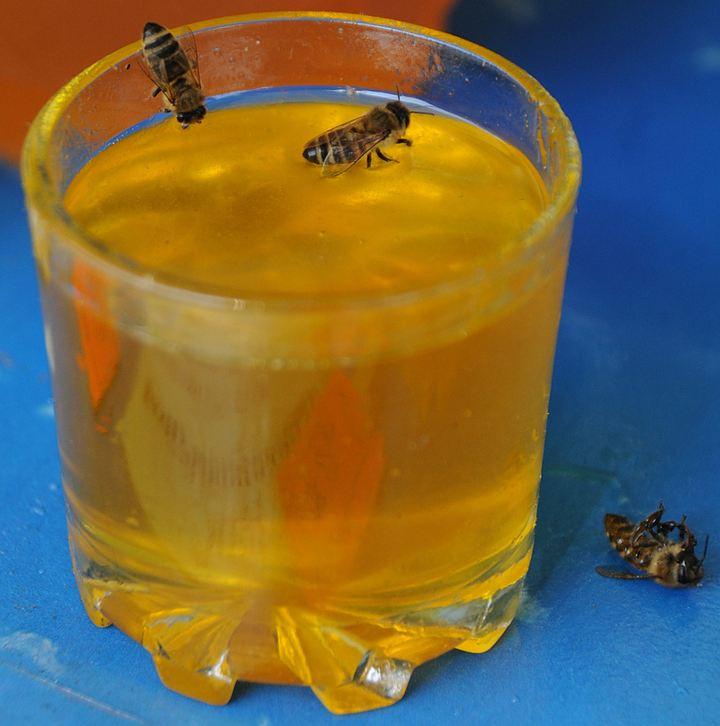 ВРостовской области обнаружили опасный для здоровья мед