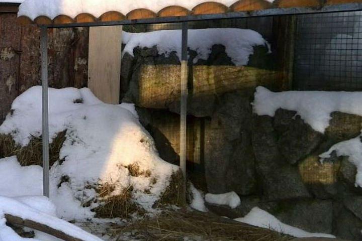 ВЛенинградском зоопарке небудут будить грызунов наДень сурка
