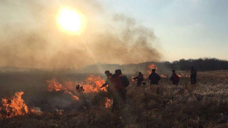 Одиннадцать новых лесных пожаров запрошедшие сутки появилось на далеком Востоке