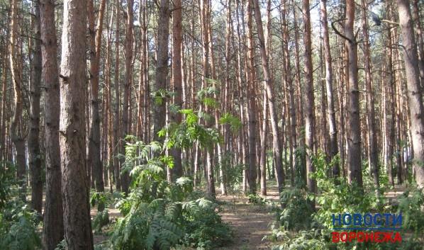 Всероссийская горячая линия попрофилактике энцефалита заработала кконцу весны