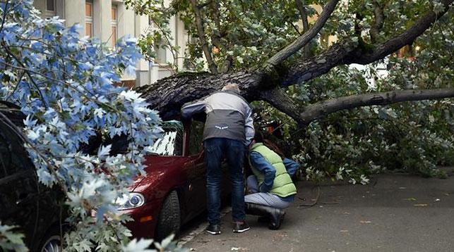 ВГермании из-за шторма погибли неменее  7 человек