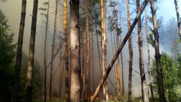 Вворонежских лесах объявили высокую степень пожарной опасности