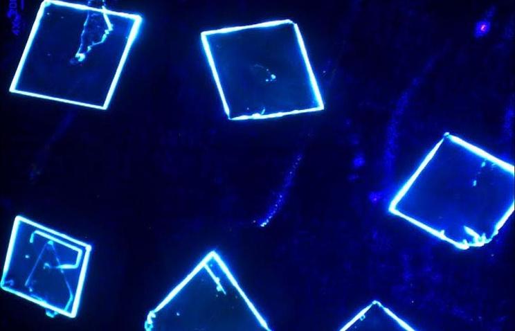 Новосибирские учёные разработали материал для гибких электронных устройств