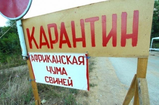 Россельхознадзор Омской области недоволен сжиганием умерших свиней без взятия проб наАЧС