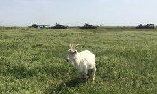 Из-за нехватки воды Крым потерял половину урожайности и все рисовое хозяйство, - Павленко - Цензор.НЕТ 8753