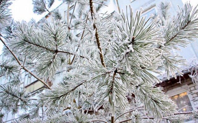 В регионе прогнозируются ночные заморозки до минус 8