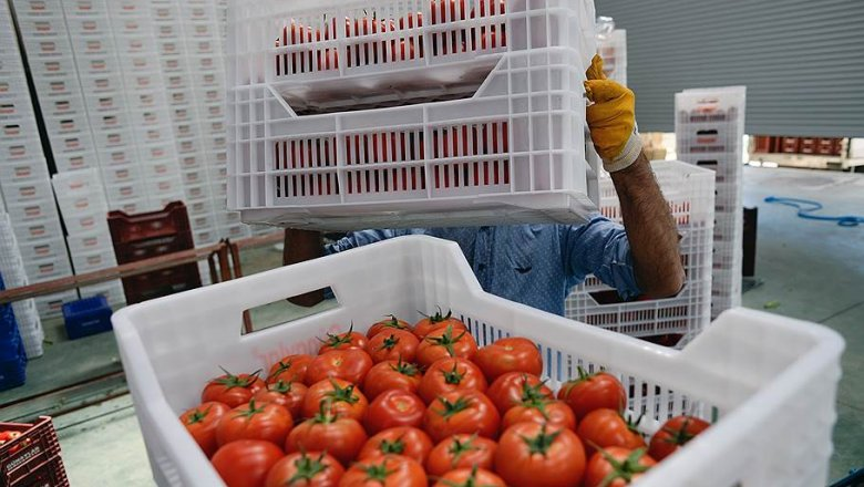 Турецкие помидоры попадают в Российскую Федерацию ввиде марокканских