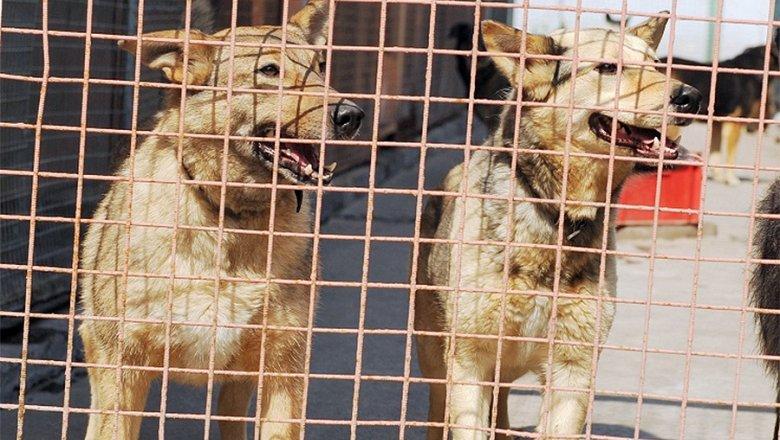 Прокуратура возбудила уголовное дело после гибели животных в приюте «Эко Вешняки»