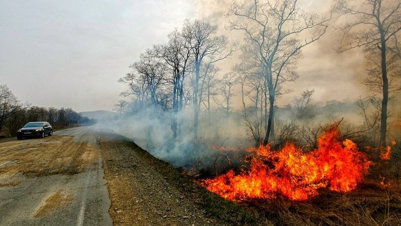 Приморью присвоен «оранжевый» уровень опасности из-за лесных пожаров
