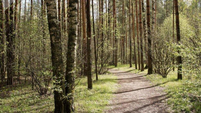 Запрет на посещение лесов действует в 12 районах Беларуси – в Гомельской, Гродненской и Брестской областях.