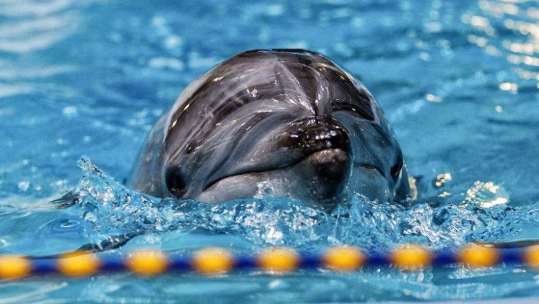 Босс  Приморского океанариума написал объявление  обувольнении после смерти  очередного дельфина