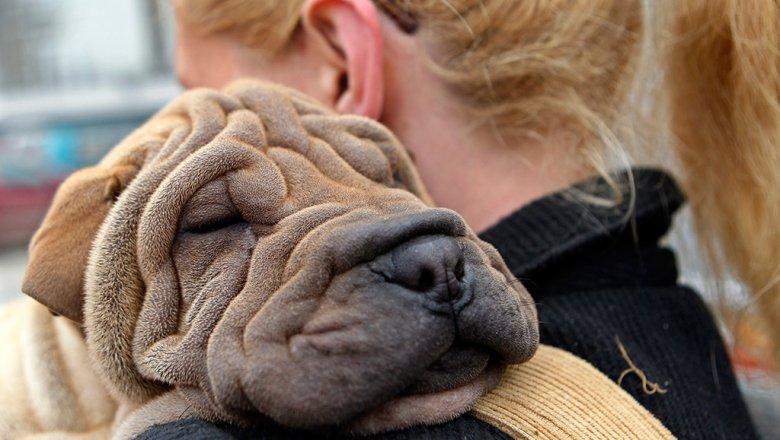 Собаки всостоянии распознавать речь иинтонации людей