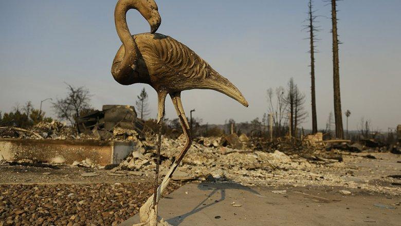 Поменьшей мере 23 человек погибли из-за лесных пожаров вамериканском штате Калифорния
