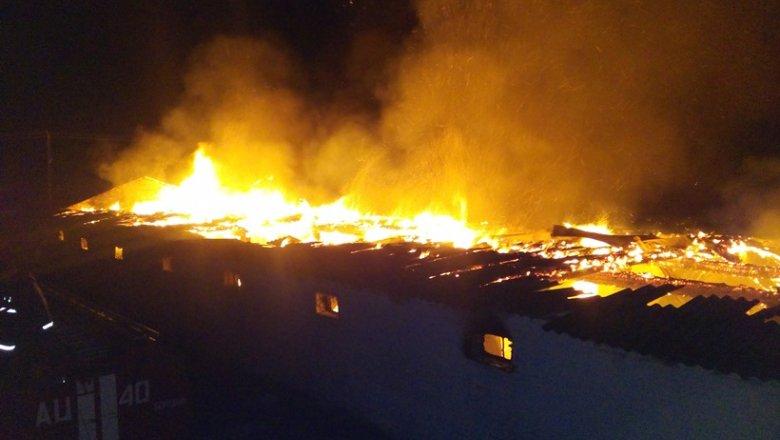 НаКиевщине при пожаре сгорели 7 тыс. кур
