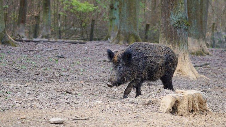 Финляндия строит награнице забор от«русских свиней»