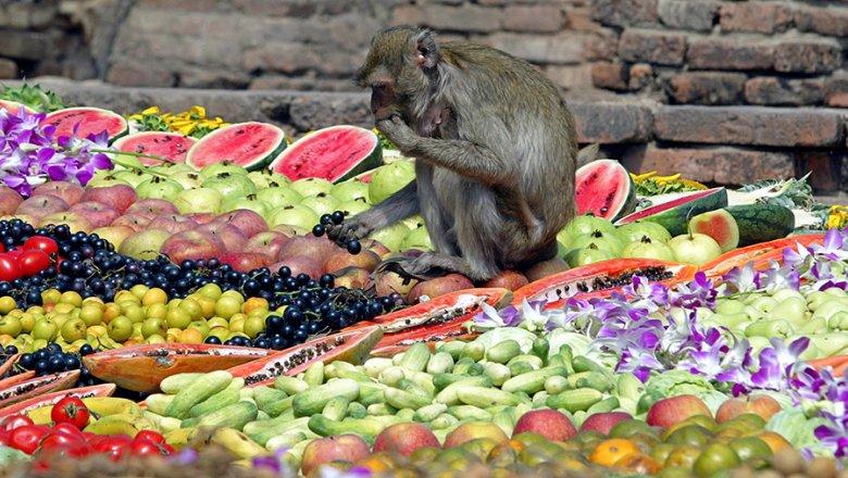 При употреблении свежих фруктов снижается риск развития диабета— Ученые