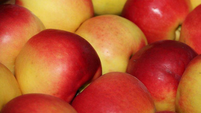 Россельхознадзор раскрыл новейшую схему незаконного ввоза яблок из республики Белоруссии