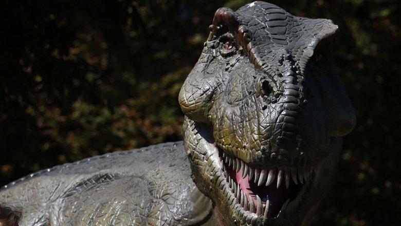 Найдена скорость гигантских динозавров