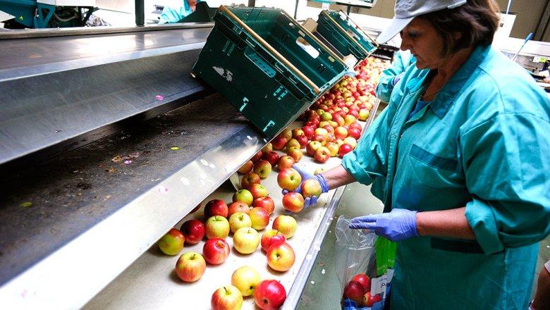 Из Белоруссии не пустили 55 тонн польских яблок под видом пива
