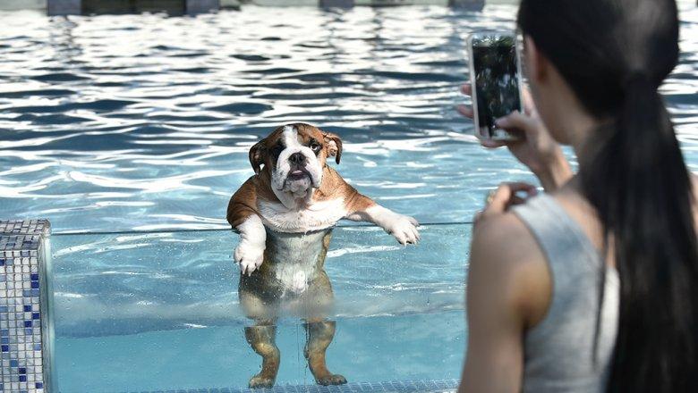 Собаки запоминают действия собственных хозяев— Исследование