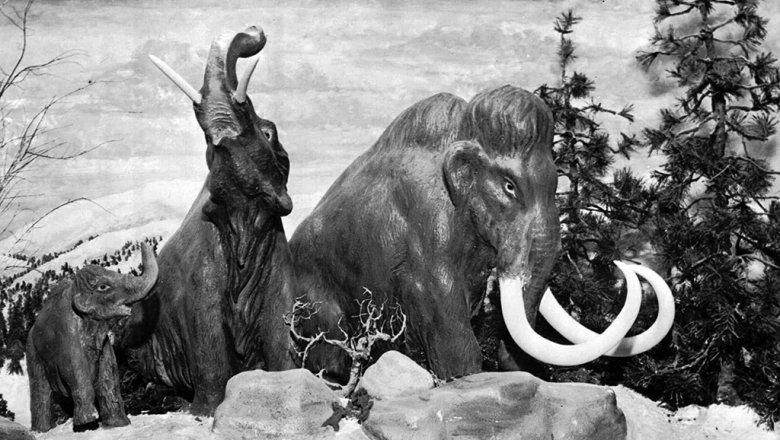 Сибиряки доказали, что мамонты болели также, как ичеловек
