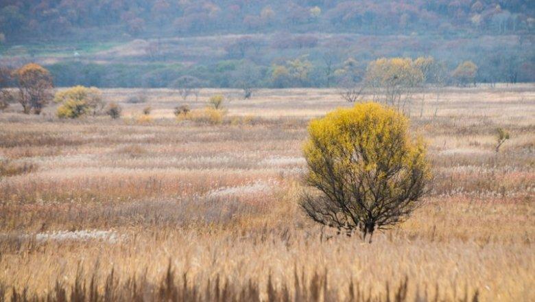 Совфед внес поправки взакон о«дальневосточном гектаре»