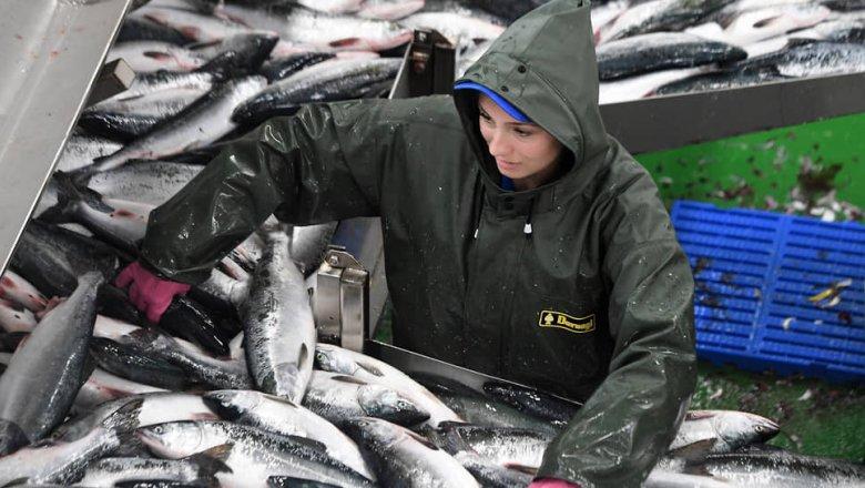 Китай режет российскую рыбу