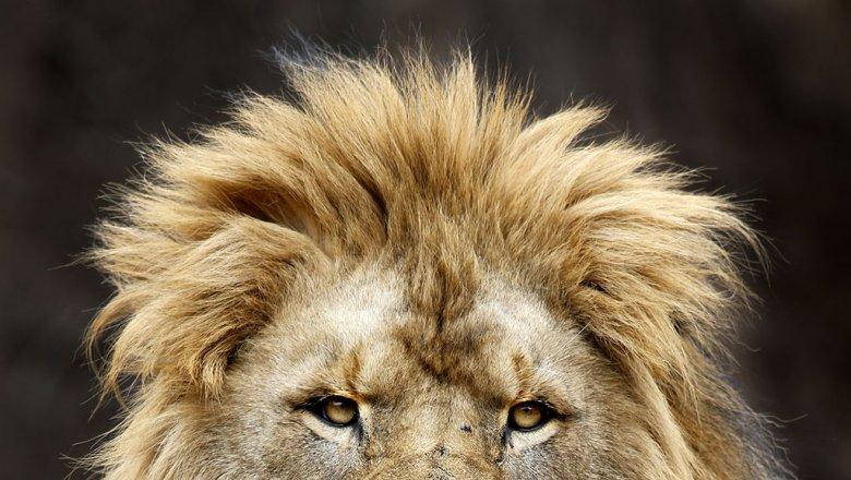 Иззоопарка вГермании убежали львы, тигры, ягуар имедведь