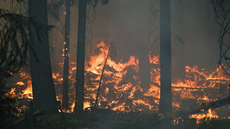 В Свердловской области загорелся лес из-за аварии на газопроводе