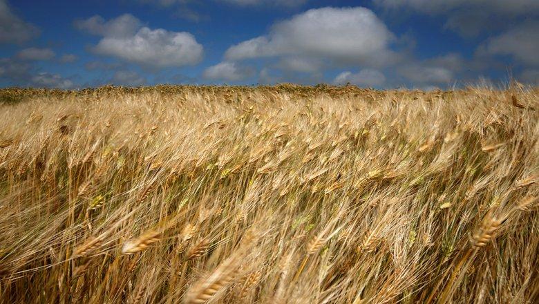 Минсельхоз пообещал затри года наладить в РФ производство пармезана