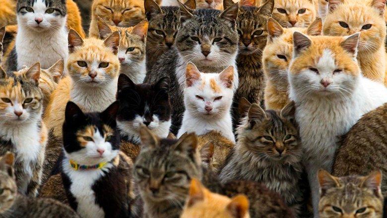 Ученые: Кошка имеет одновременно 5 личностей